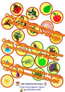 Лэпбук, цветы, комнатные цветы, необычные цветы, шаблон, идеи, для лэпбука