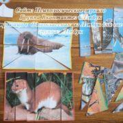 Лэпбук, Животные Севера, кто что ест, птицы,чей дом, шаблон, своими руками, кармашки