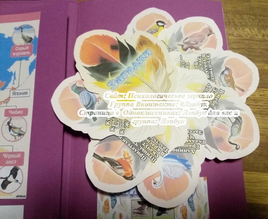 Лэпбук, птицы, перелетные, зимующие, комушка, кармашки, скачать, купить, шаблоны кармашков,своими руками