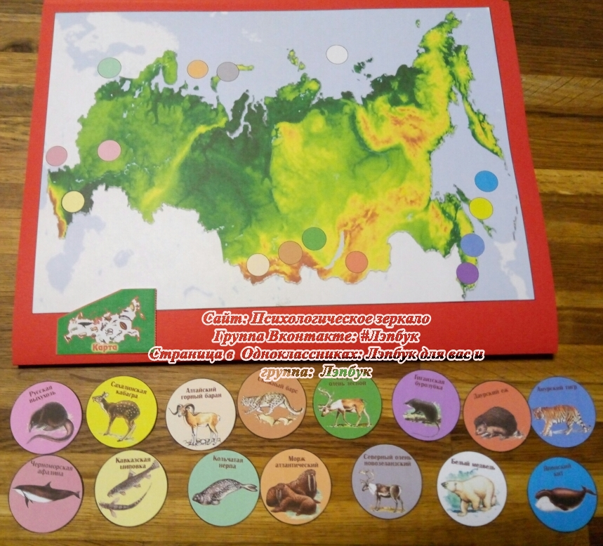Лэпбук, красная книга, Россия, животные, скачать, купить, шаблоны