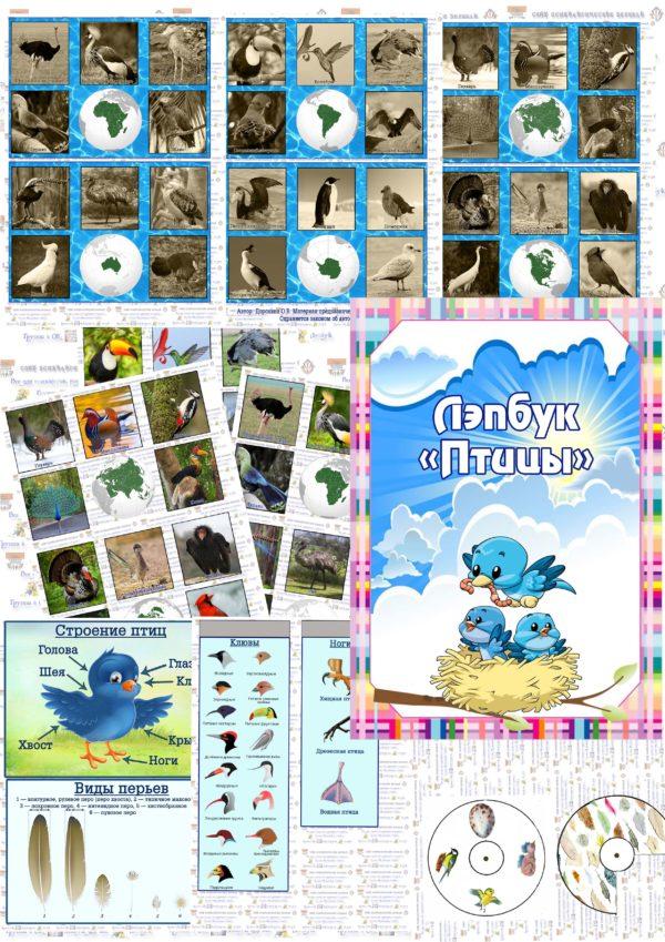 Лэпбук, мини, птицы, птицымира, строение птиц, клюв, лапы, стадии
