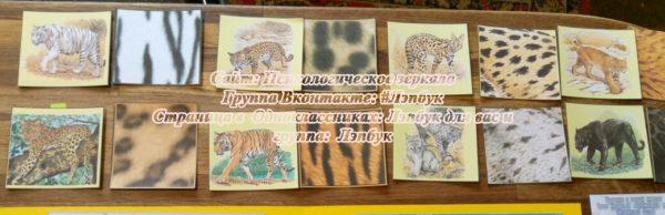 Лэпбук, Семейство кошачьих, детеныш, загадки, своими руками, шаблон, скачать