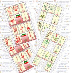 Лото, растения, красная книга, Татарстан
